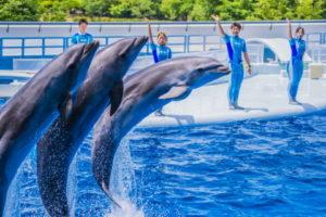 69688ca4a319a62b1b9948a59f923e08-300x258 イルカの平均寿命は?水族館と野生で違う!?