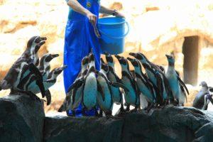 b839ae3164373dcff7c553d69577c1e4-300x143 水族館「飼育員」の給料(平均月収)は?その仕事内容とは?