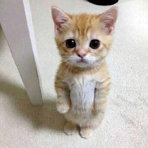 e144ee43a801c89402de34b0f46ff4fb-300x200 猫の鳴き声「あおーん」の意味は1つじゃなかった!?