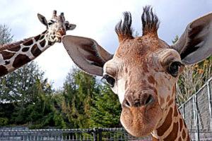 6ca497e168a794679daf1d3f99dd4054-300x200 種類別「動物園飼育員」の給料まとめ!