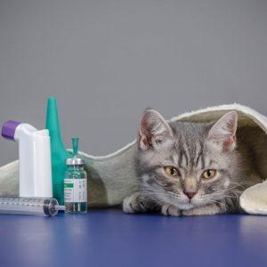 6f3e9c25b3bc85aa2d34fda922012ec6-300x300 猫の「エイズ」の症状、平均寿命は?