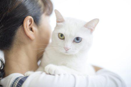 3e64044280628d8de746c675cf569805-e1543294595444 猫が「しっぽを床に叩きつける」意味、対処方法まとめ!