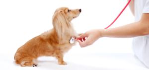 7458440f2b3fb04cfaf066e16b12ff93-300x200 犬の「てんかん」の症状別の寿命まとめ