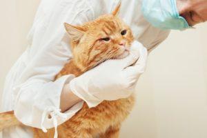 38f02bb6ab947641b633035e568f7d83-300x200 猫の「くしゃみだけ」の病気、原因、対策まとめ!