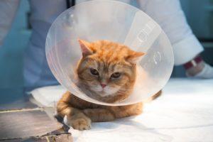 2aa051fb400ec8a0b918adf725a4f855-300x199 猫「避妊手術後」の性格変化とは?(オス、メス別)