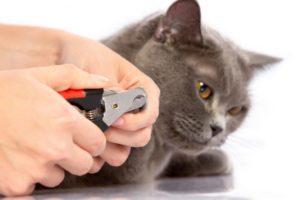 de3d8b746f4a2c6c4e681a3394fd4eae-300x199 猫の爪切りは「どこまで」切る?