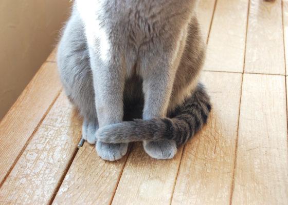 m030816-e1567256101571 猫の「尻尾が震える」時の意味まとめ!