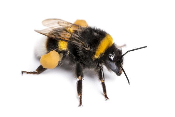 f97b2b112bb2d19d5825154f01456c1f 「蜂に刺された時」の症状・対策や放置の危険性を解説!