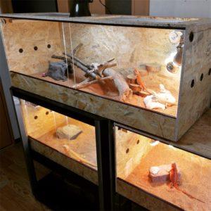 549828-300x225 アルマジロトカゲの飼い方、餌の種類まとめ!